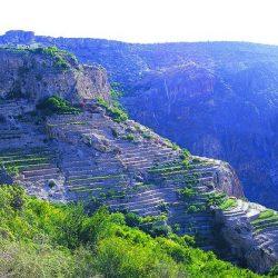 الجبل الأخضر واحة فاخرة ومقصدا ل10 آلاف سائح في شهر يناير
