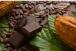 الكاكاو يطور جينياً لضمان إنتاج الشوكلاته