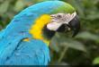 هل تحمر وجوه الطيور من فرط الانفعال؟
