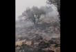 نشوب حريق أشجار في الحمراء